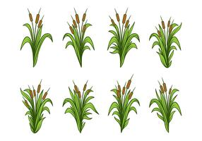 Free Hand Drawn Cattails Vector Set