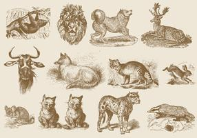 Sepia Mammal Illustrations
