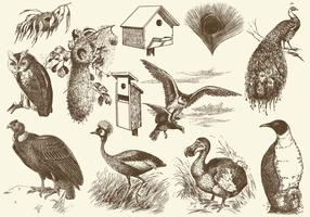 Birds And Nests Illustrations