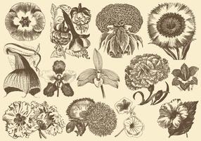 Vintage Exotic Flowers