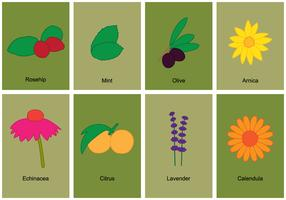 Herb Symbol Set