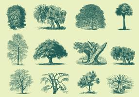 Green Trees Illustrations