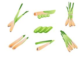 Lemongrass Vector Pack