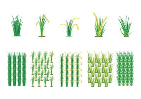 Farming Rice Field Vector