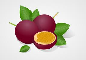 Free Passion Fruit Vector Illustration