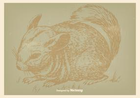 Vintage Chinchilla Illustration