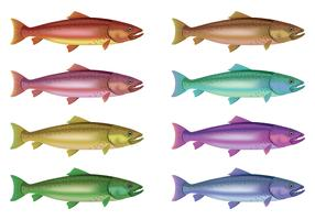 Vector Of Rainbow Trout