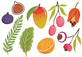 Free Exotic Fruit Leaves Vectors