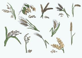 Vector Illustration Oats Collection