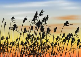 Reeds On Sunset Background Vector
