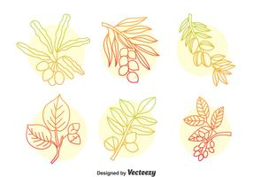 Hand Drawn Herbal Plant Vector Set