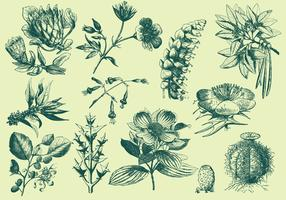 Green Exotic Flower Illustrations