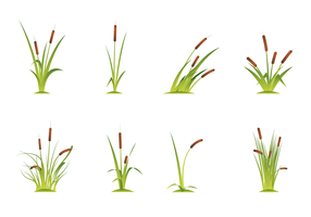 Free Cattails Vector