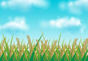 Free Rice Field Vector Illustration