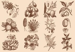 Brown Fruit And Flower Illustration