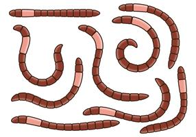 Earthworm Vector