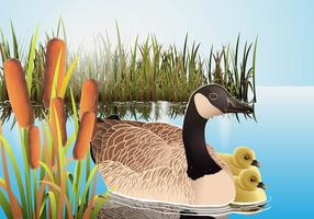 Cattails Vector With Canadian Goose