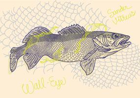Free Walleye Vector Illustration