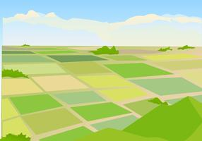 Vector Illustration of Rice field Landscape