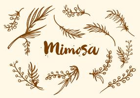 Free Hand Drawn Mimosa Plant Vector