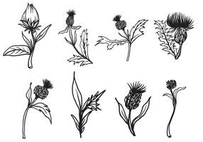Free Hand Drawn Thistle Vector