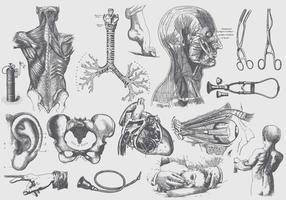 Gray Anatomy And Health Care Illustrations