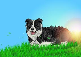 Border Collie Lay On The Ground