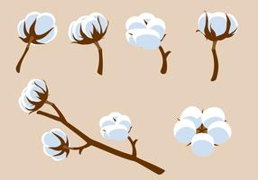 Cotton Flower Free Vector