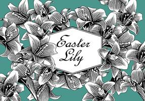 Easter Lily Free Vector