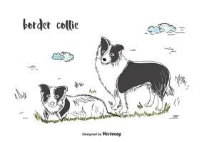 Border Collie Vector
