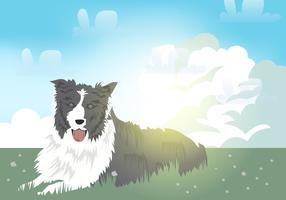 Border Colie Dog