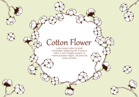 Cotton Flower Plant Vector