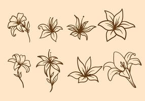 Free Easter Lily Vector