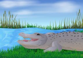 Gator In The River Illustration