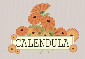 Free Calendula Illustration