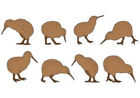 Set Of Kiwi Bird Vectors
