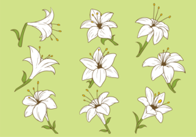 Easter Lily Plant Vector