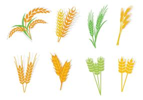 Free Different Type Oats Vector