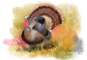 Wild Turkey Bird