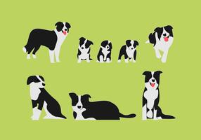 Border Collie Vector Illustrarion Sets