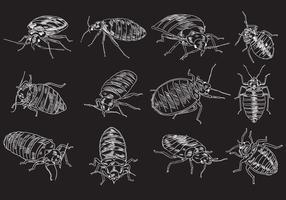 Bed Bug Illustration Set