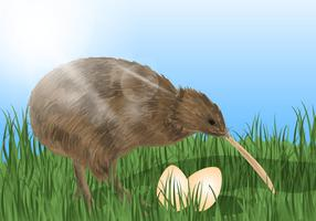 Kiwi Bird With The Eggs