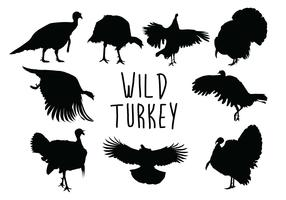 Silhueta selvagem de Turquia