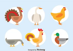 Nice Fowl Collection Vector