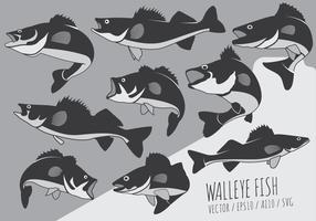 Fish Perch and Walleye Vectors