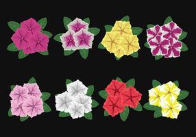 Petunia Flowers Vector