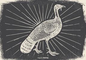 Vintage Wild Turkey Illustration