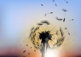 Beautiful Dandelion With Sunset Background
