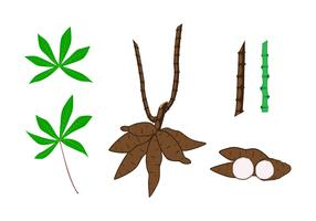 Cassava Plant Element Vectors