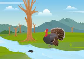Wild Turkey Illustration Vector